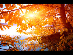1 (3) (_ErliZz_) Tags: november autumn trees light sunset red sky sun color tree green fall nature water colors grass leaves yellow clouds forest canon evening coast october warm ray russia warmth september foliage rays sunlit volga yaroslavl endoftheyear 5dmkii