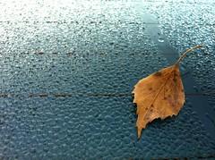 Løøøøv (mrjorgen) Tags: autumn water car dewdrops leaf automotive h2o dew rearwindow condensation birch vann carwindow høst bjørk løv dugg kondens bilvindu bakvindu duggdråper