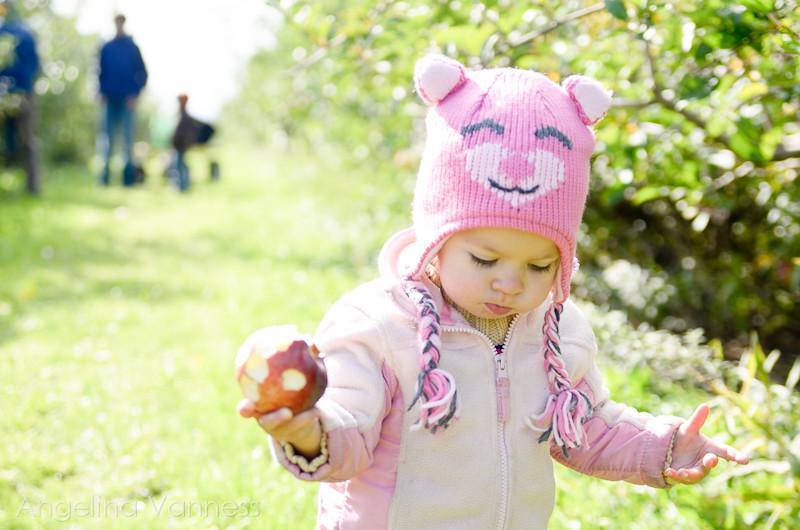 Apple Picking1