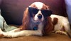 Cool Winston