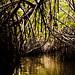 Mangroves-4