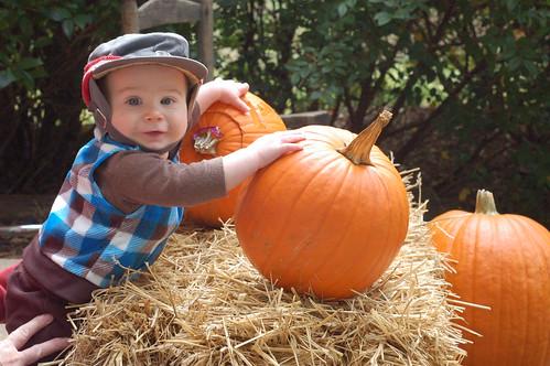 z pumpkin