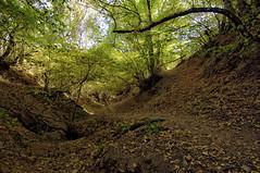 In the forest (Susana Rey) Tags: forest nikon camino bosque otoo senda 1224 hiruela