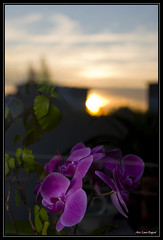 Orchidées, reflets sur la vitre. (reflection on the window) (Alexandre LAVIGNE) Tags: sun flores flower fleur reflections photography soleil photo purple orchids pentax wordpress reflet fiori orchidee reflexiones цветы riflessioni تأملات platinumheartaward pentaxk20d الزهور engival размышления louisengival orchideeviola לילאַ אָרטשידס الأرجوانيالسحلية lilaorchideen orquídeasmoradas фиолетоваяорхидея