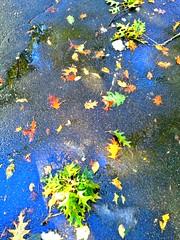 Autumn '11 (SurFeRGiRL30) Tags: blue autumn light red orange sun sunlight black green fall colors leaves sunshine rain yellow newjersey pretty nj sunny driveway fallen sunlit puddles wer