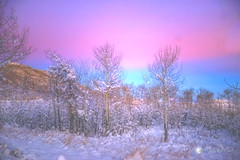 MORNING SONG (Aspenbreeze) Tags: morning winter light cold sunrise dawn colorado wintersky highaltitude grandmesa earlyam pastelsky bestcapturesaoi aspenbreeze elitegalleryaoi moonandbackphotography