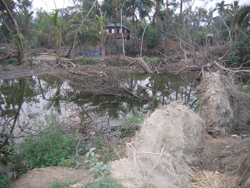 Pond dyke damaged by tidal surge and fallen trees, Bangladesh. Photo by WorldFish, 2008