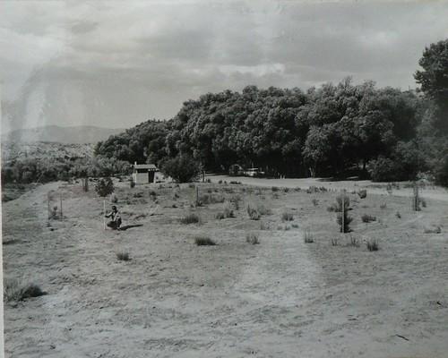 Ozena 1964 Front