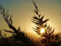 At the end of another beautiful day......... (ubichan - Away A LOT :o() Tags: blue trees sunset sky orange sun mountains portugal silhouette sony silhouettes pôrdosol pinos anoitecer belmonte crepúsculo castelobranco serradeestrela escurecer centralportugal sonydsch9 ubichan regiãodocentro