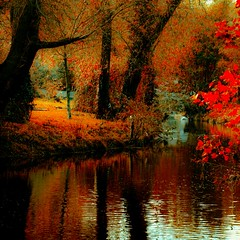 A bend in the River Dodder (Steve-h) Tags: blue autumn ireland light red dublin orange brown macro green art fall tourism nature canon reflections river lens grey design firefox flooding europe colours flood mozilla tourists litter adobe handheld recreation autumnal aerlingus allrightsreserved corrupt corruption lightroom dodder reinstall uninstall steveh riverdodder saariysqualitypictures canoneos5dmk2 bestcapturesaoi doubleniceshot canonef100mmf28lmacroisusm tripleniceshot elitegalleryaoi mygearandme mygearandmepremium mygearandmebronze mygearandmesilver mygearandmegold mygearandmeplatinum mygearandmediamond artistoftheyearlevel2 galleryoffantasticshots adobelightroom35 programmecorrupted rememberthatmomentlevel4 rememberthatmomentlevel1 rememberthatmomentlevel2 rememberthatmomentlevel3 rememberthatmomentlevel7 rememberthatmomentlevel9 rememberthatmomentlevel5 rememberthatmomentlevel6 rememberthatmomentlevel8 rememberthatmomentlevel10