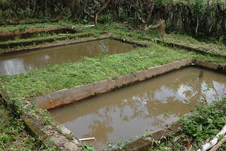 Aquaculture, Cameroon. Photo by Randall Brummett, 2001