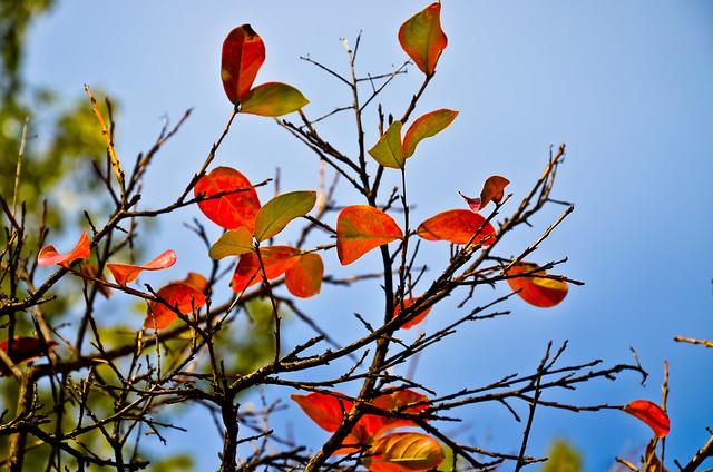 otoño 16