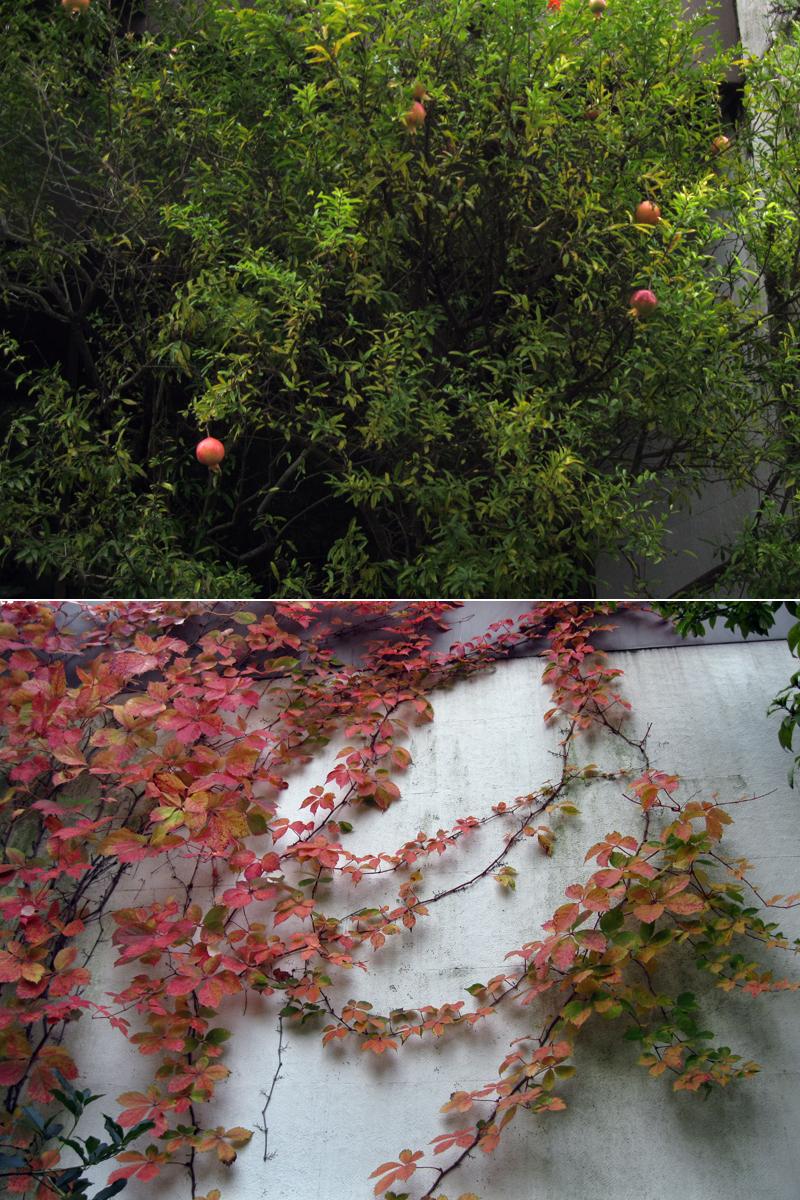 Romãs e folhas vermelhas // Pomegranates & Red Leaves