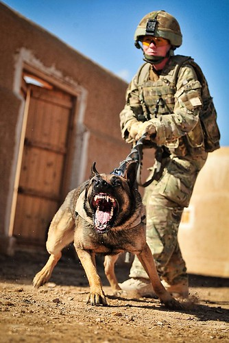 10 Things You May Not Know About Military Dogs - BarkPost