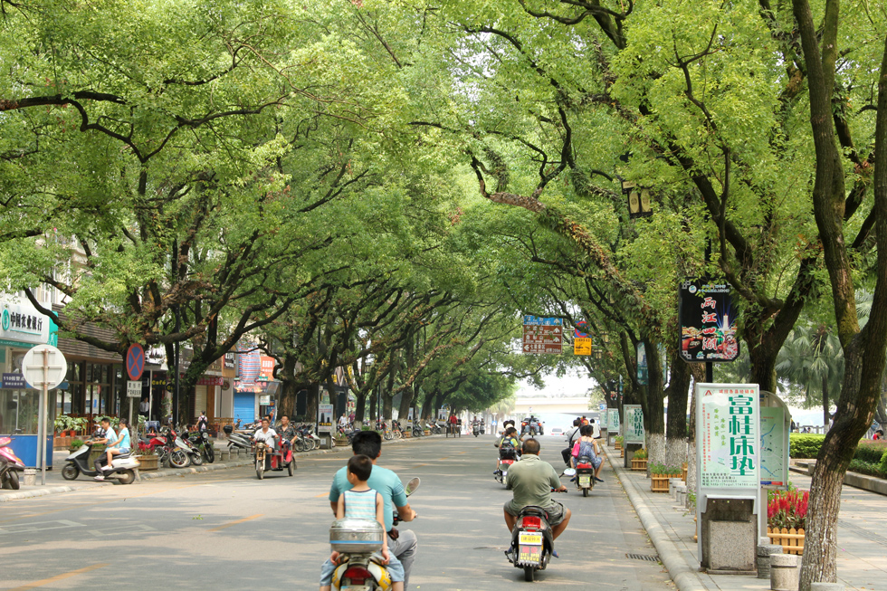 Beautiful Tree Lined Road in Guilin