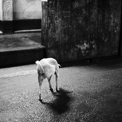 A stray dog in front of a mazaar (N A Y E E M) Tags: street dog evening cropped mazaar