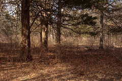 Penn's Woods at Bowman's Hill