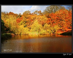 Pool Of Autumn Colour. (Picture post.) Tags: autumn green nature water clouds reflections landscape eau shadows ducks bluesky paysage arbre soe beechtrees autumncolour platinumheartaward mygearandme mygearandmepremium mygearandmebronze mygearandmesilver mygearandmegold
