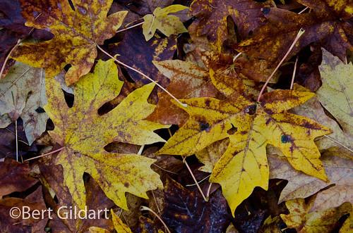 Fall-Eugene-1