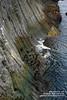 Snaefellsnes shs_n3_081486 (Stefnisson) Tags: sea summer landscape iceland cliffs og ísland sjór snæfellsnes strönd hafið stuðlaberg fjara klettar hnappadalssýsla stefnisson