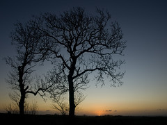 Ashes at dawn (D.Y) Tags: trees sky silhouette sunrise scotland reaching fife clear ash graduated tncwc tncwc203