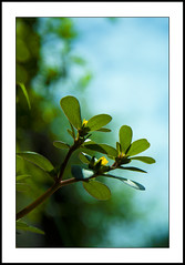 No name (e.nhan) Tags: life light flower green art nature leaves yellow closeup leaf dof bokeh backlighting enhan