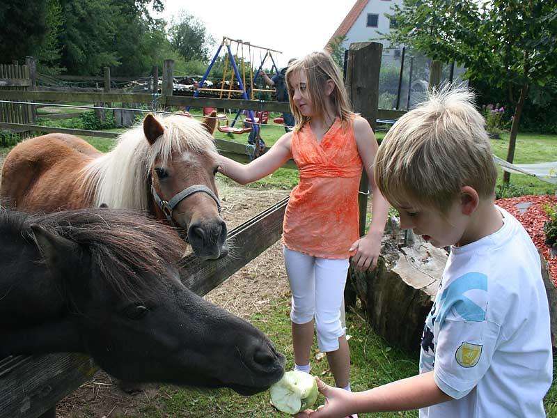 Ferienwohnungen Selz - Kinder füttern Ponys