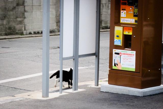 Today's Cat@2012-03-28