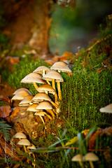 Pilz-Familie in der Drachenschlucht