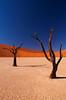 Trees of the Vlei #2 (JMK/Photography) Tags: trees tree landscape sand desert dune sanddune namibia sossusvlei namib deadvlei naturepoetry naturesgallery flickrchallengegroup flickrchallengewinner artistoftheyearlevel3 artistoftheyearlevel4 musictomyeyeslevel1 artistoftheyearlevel5 artistoftheyearlevel7 artistoftheyearlevel6