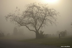 After Life (TooLoose-LeTrek) Tags: mist tree cemetery grave fog death haze path gravestone atmospheric