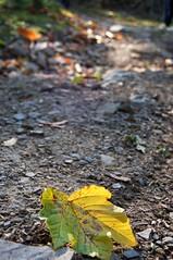comincia l'autunno (i'gore) Tags: natura workshop fotografia prato paesaggio storia montemurlo bisenzio cantagallo circoscrizionenord valdibisenzio areeprotette gruppofotograficozoomzoom circoscrizioneovest