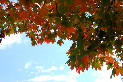 leaves-0166