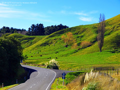 scenic road (Waleed Ibrahem) Tags: life road trees newzealand christchurch mountain tree green beautiful grass animal animals island countryside cows scenic olympus diamond zealand nz  kiwi ibrahim zuiko waleed        tapu                    1260mm  diamoonds  e620   aldokhail aldakhil             480
