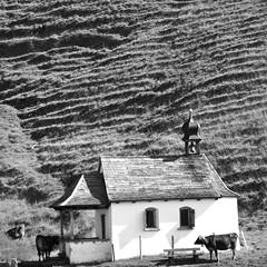 Kirche (Jean-Paul J) Tags: bw mountain green church switzerland cows luzern chapel hike fields desaturated hamlet lungern obwalden justpentax schonebuel
