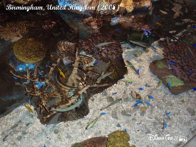 Birmingham Sea Life 13