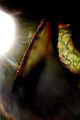 Photosyntse. (Jean-Marc Valladier) Tags: light sun leaves energy energie rays gettyimagesfranceq1
