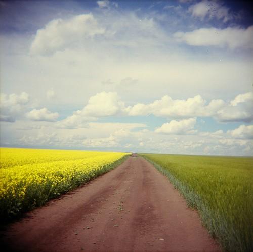 beautiful road_016