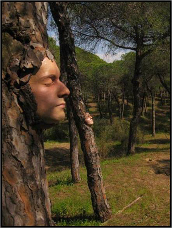 human face on tree