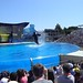 Sea World with SYR - 045