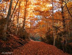 Tardor - 504 (Pep Companyó - Barraló) Tags: otoño tardor bergueda josep faig gresolet companyo barralo