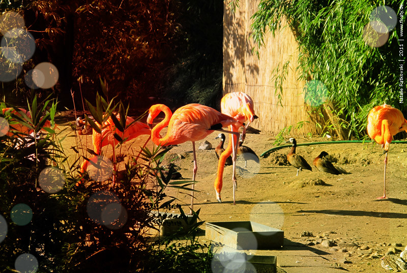 Zoo Duisburg, Germany