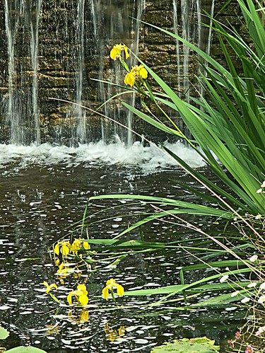 62 Waterfall and Yellow Iris in the Pond Knowle Gardens