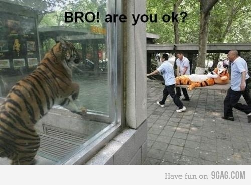 tiger-are-you-ok