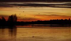 La Loire à l'aube à Montlouis (Touraine) 3 (jmsatto) Tags: loire aube touraine montlouis doubleniceshot tripleniceshot