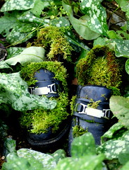 Obviously not Mick Jagger's shoes... (SteveJM2009) Tags: uk autumn leaves leather garden moss october shoes hampshire planter buckle rollingstone stevemaskell clogged hants 2011 hwt blashfordlakes