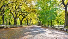 Central Park - Fall 2011 (carlos fabrizio) Tags: nyc newyorkcity centralpark