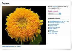 FP-Teddy-Bear Sunflower (*Gitpix*) Tags: explore frontpage teddybearsunflower explored explorefrontpage