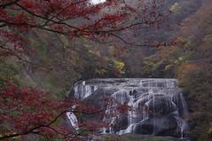 Autumn colors (fukui_norisuke) Tags: japan waterfall maple pentax autumncolors cascade ibaraki kx fukurodanotaki daigomachi da★1650mmf28edalifsdm kujigun waterringplace 袋田の滝 紅葉