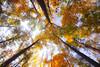 Autumn (Saleh Mohammed) Tags: wood blue autumn sky canon eos dc sigma mohammed 1020mm saleh محمد d600 صورة صالح سماء hsm كانون سيقما alfuraiji الفريجي